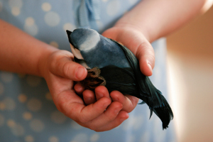 small bird in a childs hand