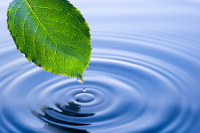 leaf and water droplet
