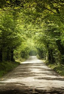 Tree-tunnel-Small-214x313
